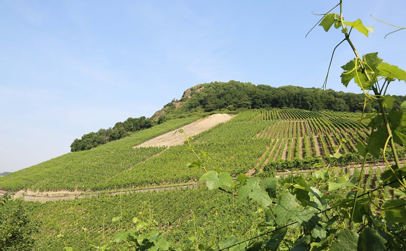 Der Berg ruft – Wein und Genüsse auf der Landskrone