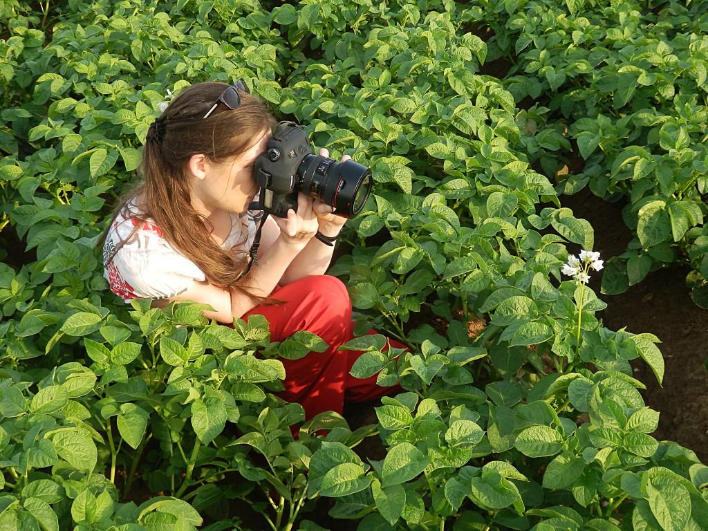Im Kartoffelblütenmeer: Die Fotoküche bei der Arbeit