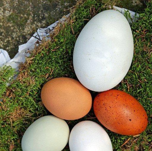 Osterfest mit Eiernest