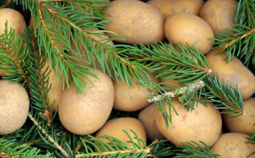 8B7A7206 1 weihnachtsbaumkartoffeln frisch eingelegt ausschnitt