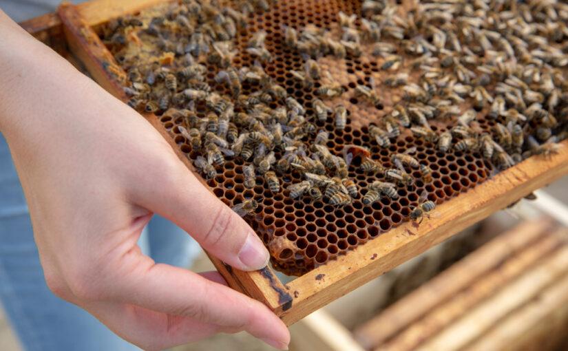 Hobby: Bienen & Honig